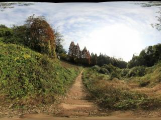 青城山 全真观上去走完林荫的山间野