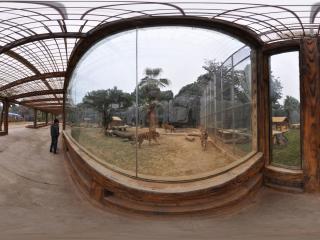 南宁动物园 NO.6