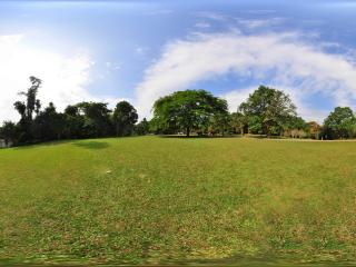 西双版纳中科院植物园 粉花山扁豆树