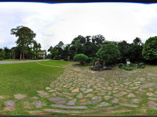 西双版纳中科院植物园 龙血树