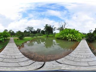 西双版纳 中科院植物园 小鸟蕉园 NO.3