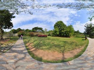 西双版纳中科院植物园 菩提树全景