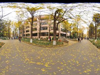 云南大学 银杏大道