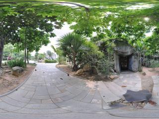 深圳海上田园户外的热带植物