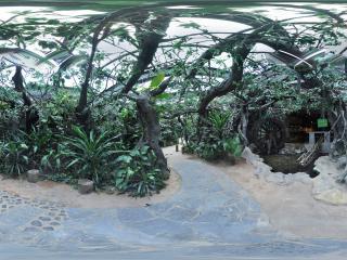 深圳海上田园热带植物