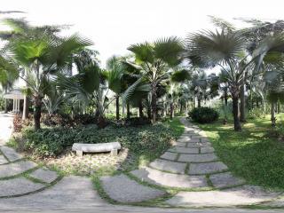 广州珠江公园热带植物