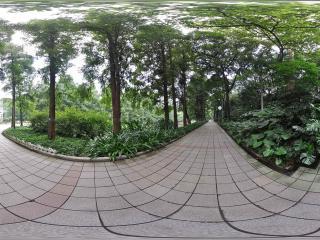 广州博物馆林荫路