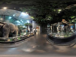 广州博物馆大象化石