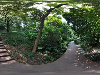 广州云台花园林荫路