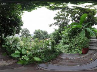 广州岭南印象园热带植物全景