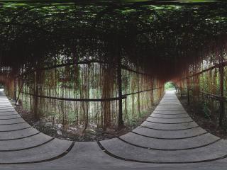 广州岭南印象园热带植物走廊
