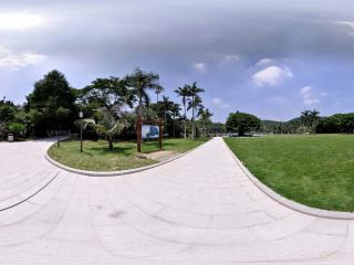 深圳仙湖植物园青绿草坪