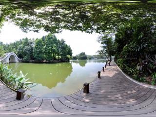 深圳仙湖植物园沿湖小路
