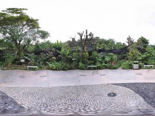 深圳仙湖植物园石子路