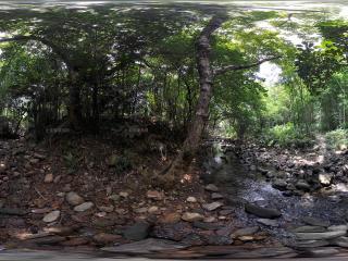 深圳仙湖植物园潺潺溪水全景