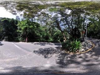 深圳仙湖植物园的林荫小径