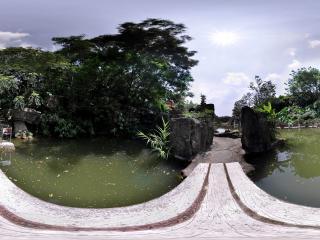 深圳仙湖植物园湖中路