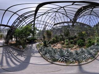 深圳仙湖植物园热带植物