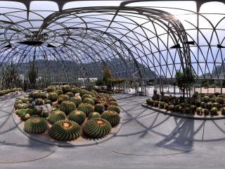 深圳仙湖植物园中的仙人掌