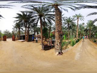 突尼斯托泽尔 棕榈树之乡全景