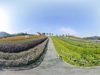 深圳东部华侨城茶溪谷四季花田