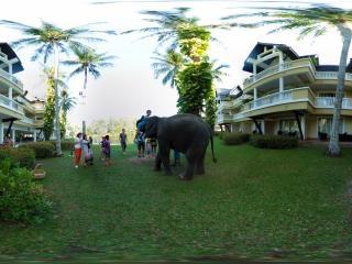 六岁的泰国象宝宝全景