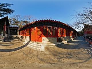 大觉寺-千年银杏树全景