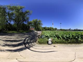 北京—玉渊潭公园荷塘