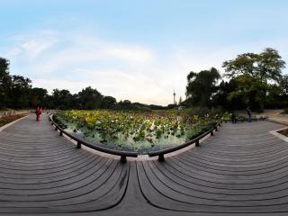 北京—玉渊潭公园荷塘秋色(五)