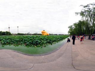 北京—北京玉渊潭公园拍金蝉