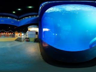 曲江海洋馆虚拟旅游