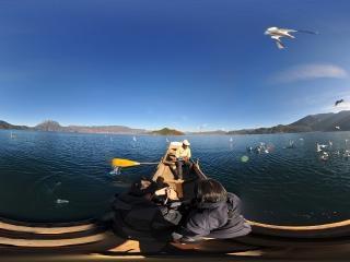 云南—大理湖中的海鸥