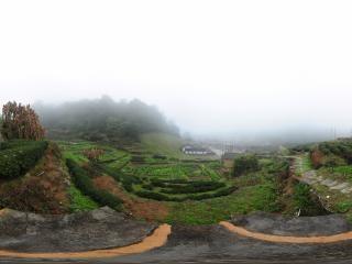 德远堂后山 雾
