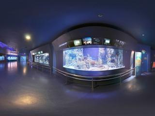 海底环游-海鳗一
