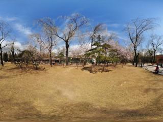 动物园樱花