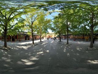 银杏树过道2全景