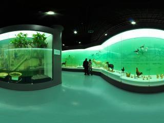 动物的艺术展厅