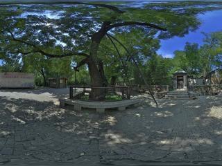 曹雪芹纪念馆门前槐树
