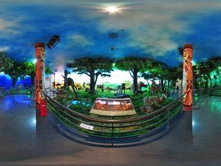 神奇的非洲展厅2