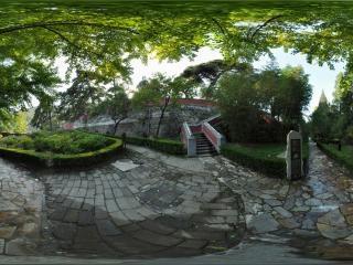 牡丹园古树全景