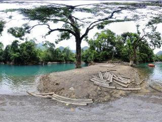 鸳鸯湖 鸳鸯树