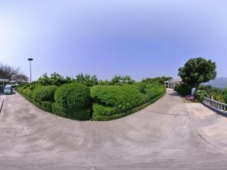凤凰阁旁杨梅树