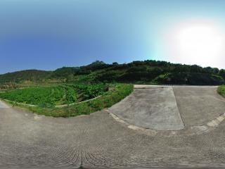柚园风光2全景