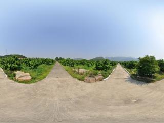 柚园中心全景