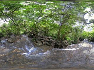 水上森林中