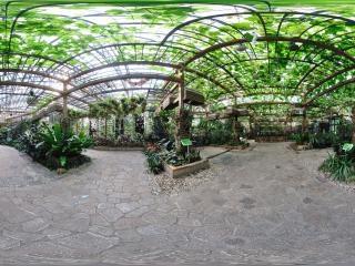 四季植物馆兰花展区