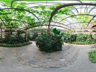 四季植物馆珍奇植物展区