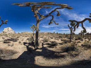 美国《约书亚树国家公园》全景