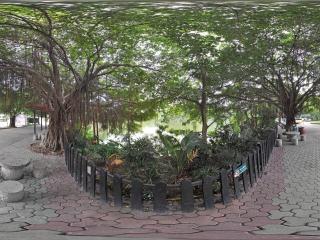 热带树4全景