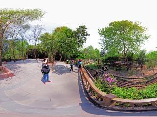 成年大熊猫别墅2全景